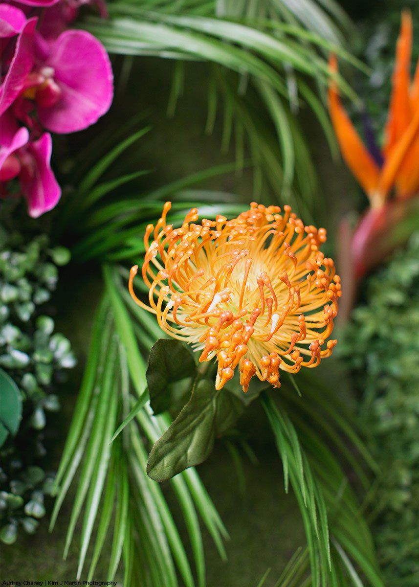 Cheap Artificial Dried Flowers Buy Directly From China Suppliers High Q Protea Cynaroides K Flower Window Artificial Flowers Wedding Artificial Silk Flowers