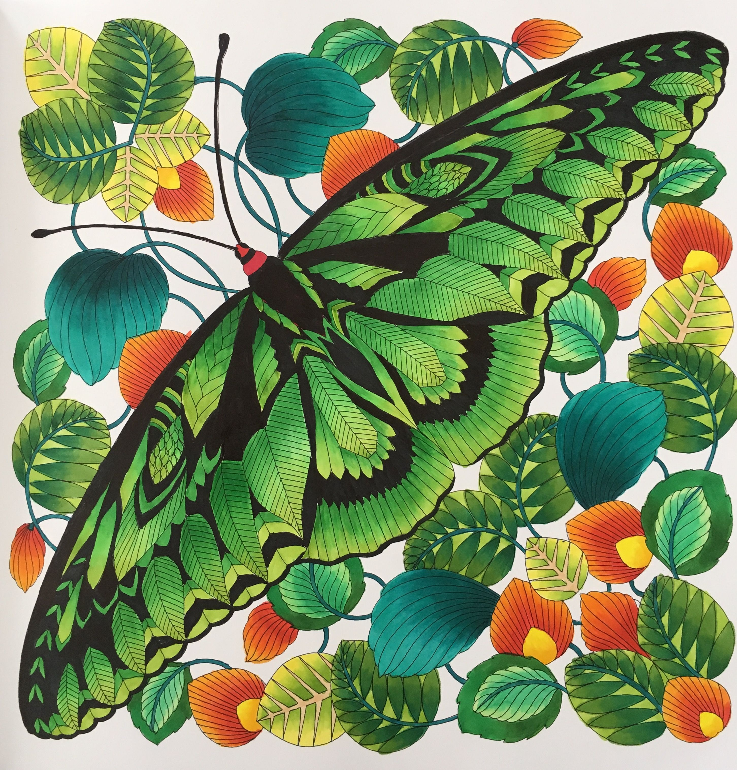 Rajah Brookes Birdwing Butterfly From Millie Marottas Curious Creatures Using Copic Markers