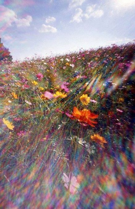 46 ideas flowers wild wildflowers colour #floweraesthetic