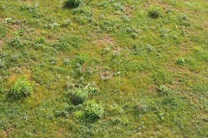 how to get rid of moss in lawn