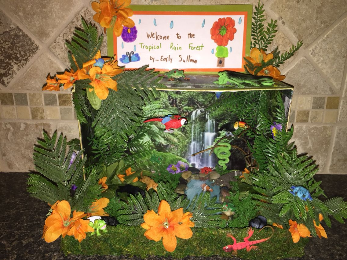 Tropical Rainforest Diorama With Images
