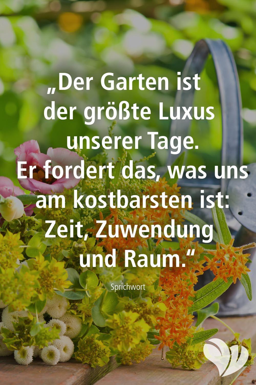 Ein Garten Gibt So Viel Garten Hintergarten Gartenspruche