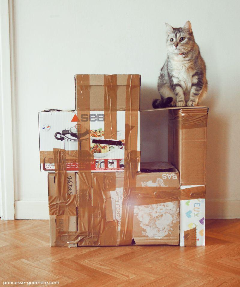un arbre chat en cartons version pauvre mais tellement gnial pour nos - Arbre A Chat Maison