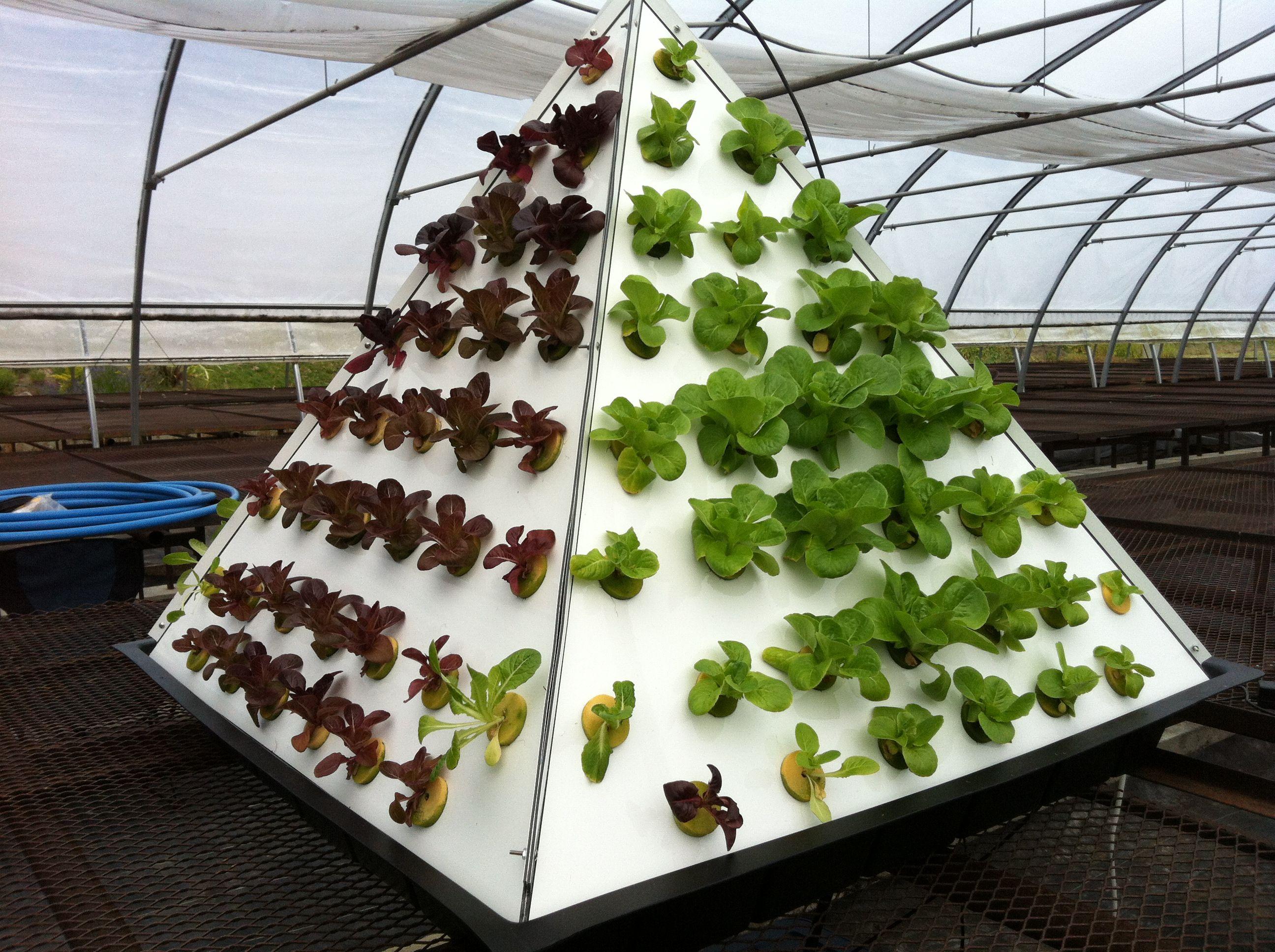 Pyramid Gardening Organic Veggies Hydroponic