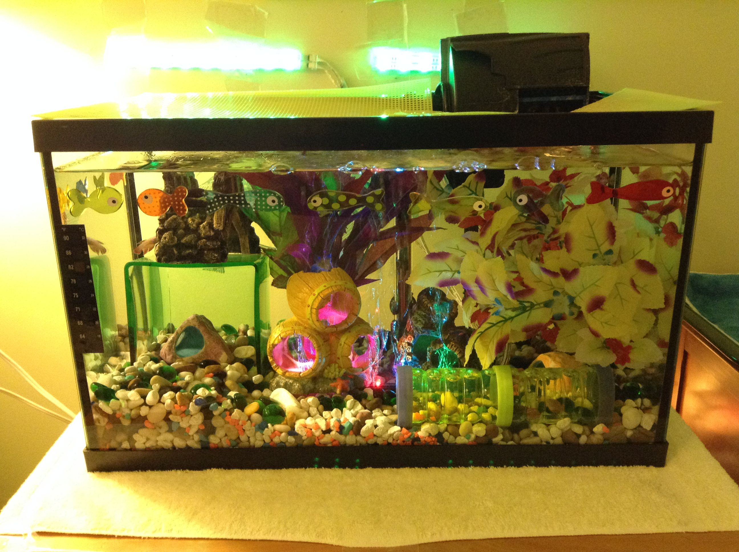 My Current Set-up of My Female Betta Tank. Features: Decorations ...