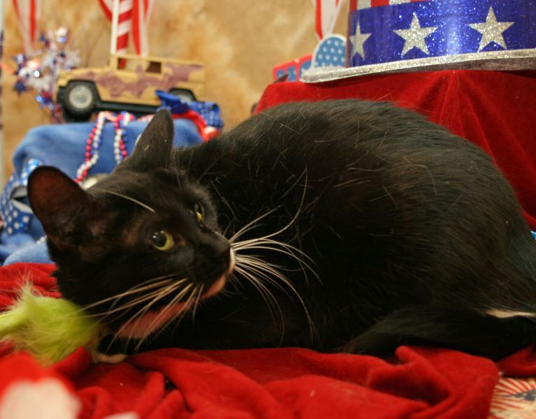 Ms. Amanda Jane needs a FUREVER Home. Please see her PURR