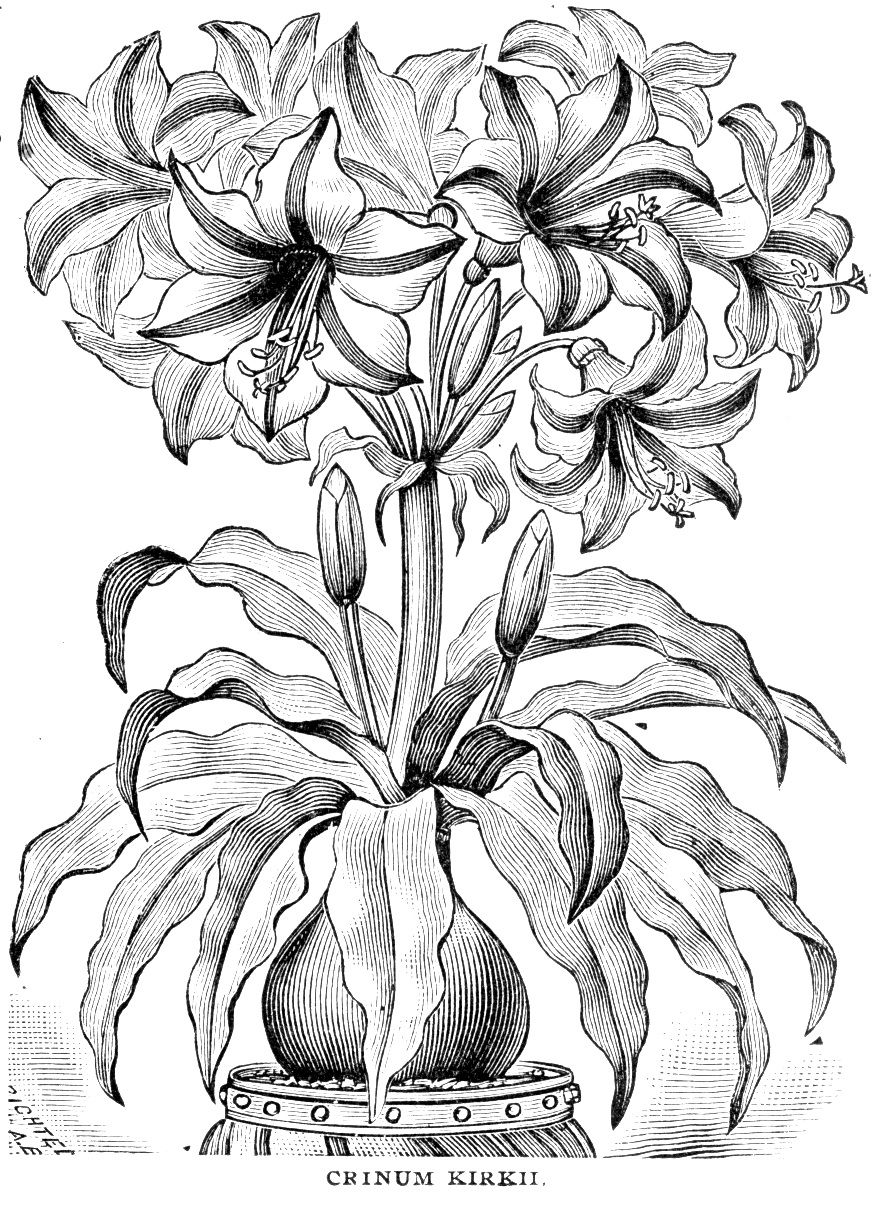 Flowers Color Coloring Pages Colouring Adult Detailed