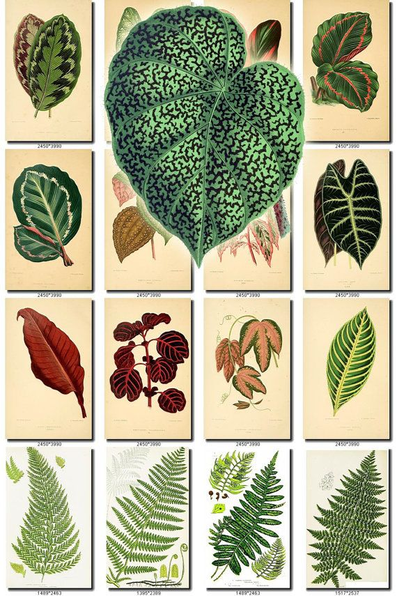 Leaves Grass 14 Collection Of 280 Vintage Pictures Leaf Ferns Aart