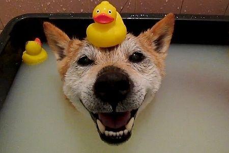 ha qu' on est bien dans son bain  ♡♥♡