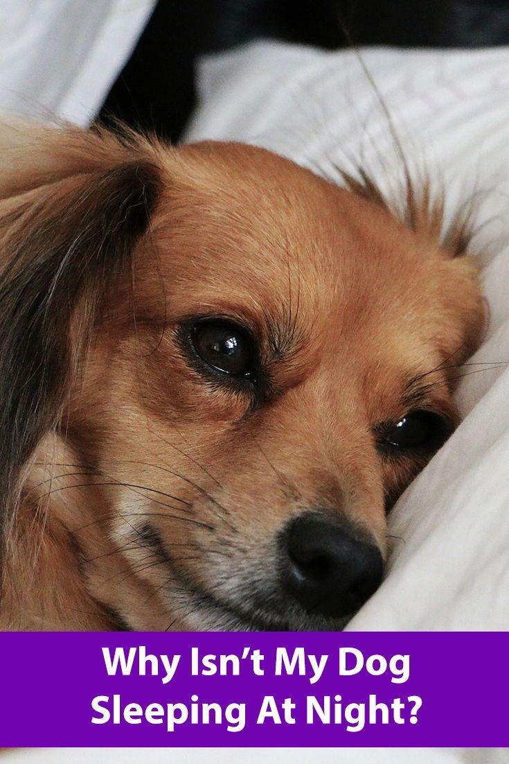 Why Isn't My Dog Sleeping At Night? Aggressive dog