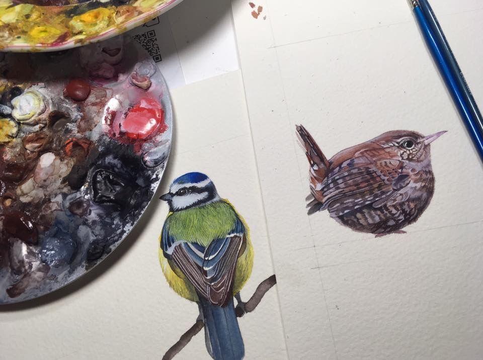 Wren and blue tit watercolours.