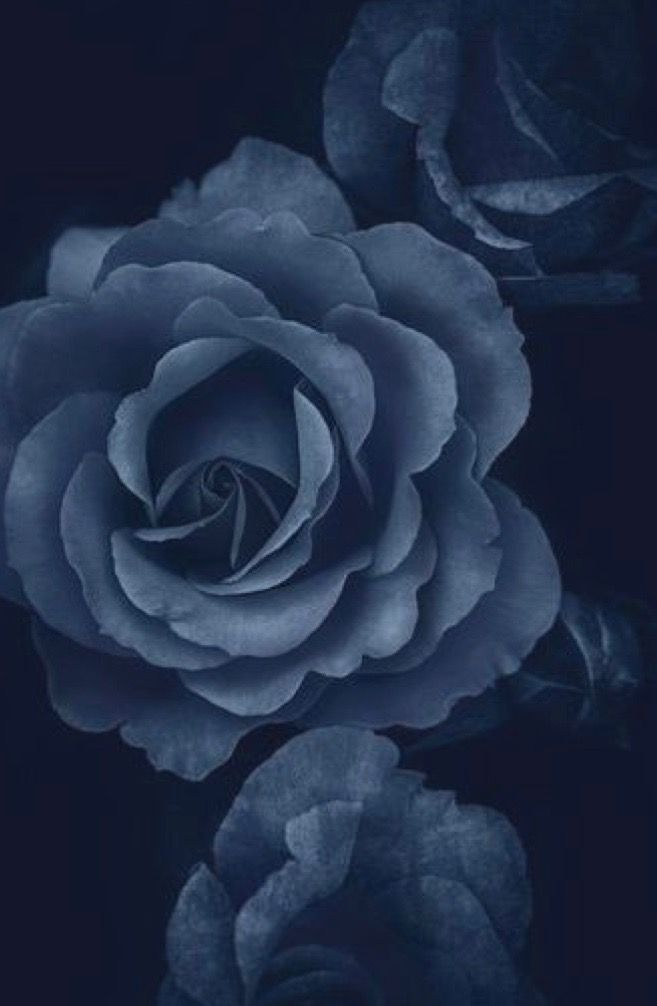 pin by janes colors on indigo blues blue roses
