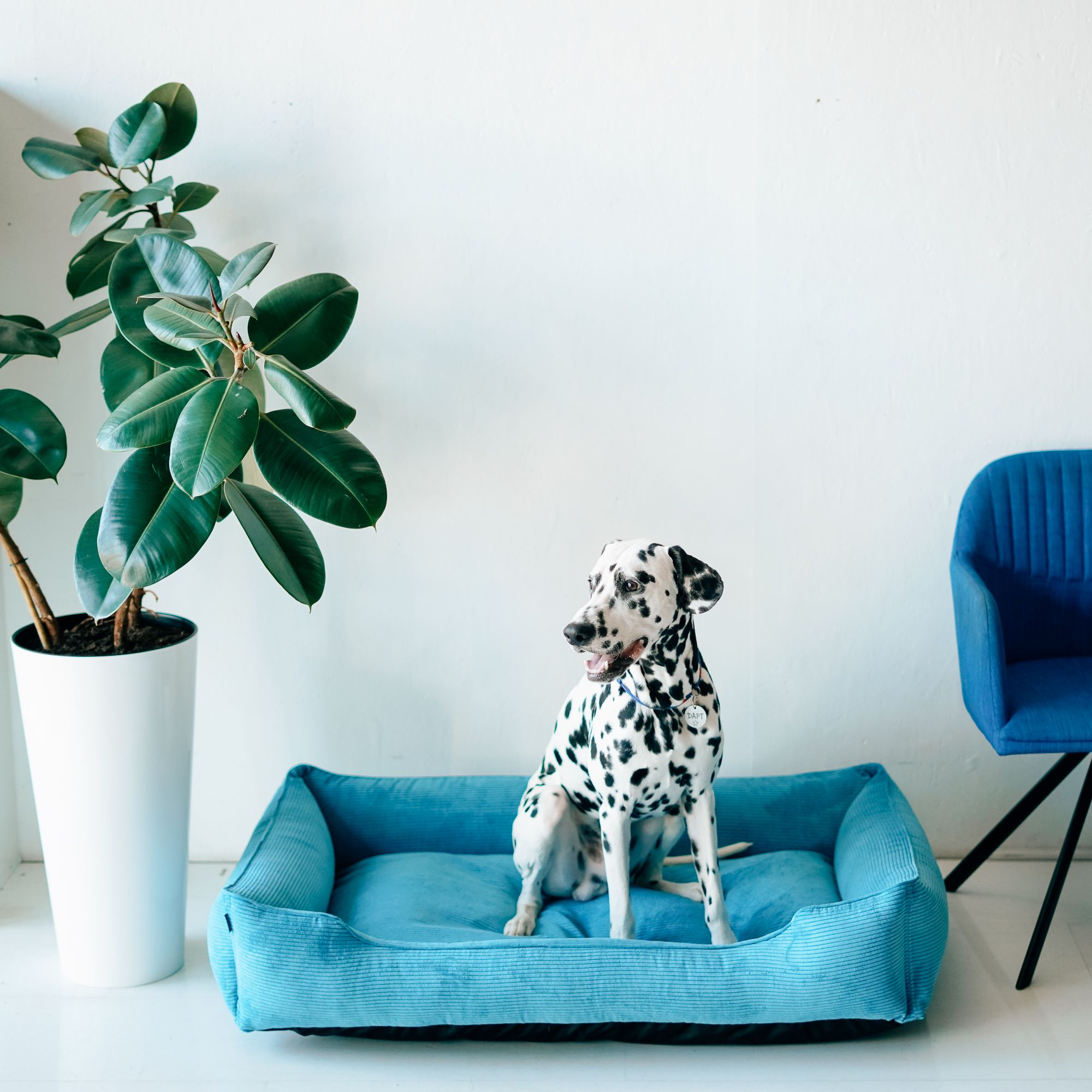 Bright Comfort Bed For Your Boy Green Leaves And Blue Velvet And Dalmatian Dog Puppy Beds Pet Mat Your Pet
