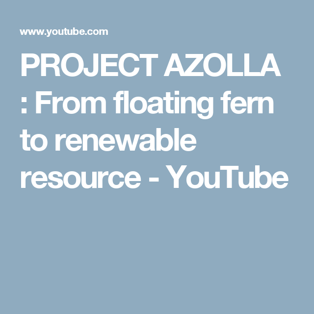 PROJECT AZOLLA : From floating fern to renewable resource - YouTube