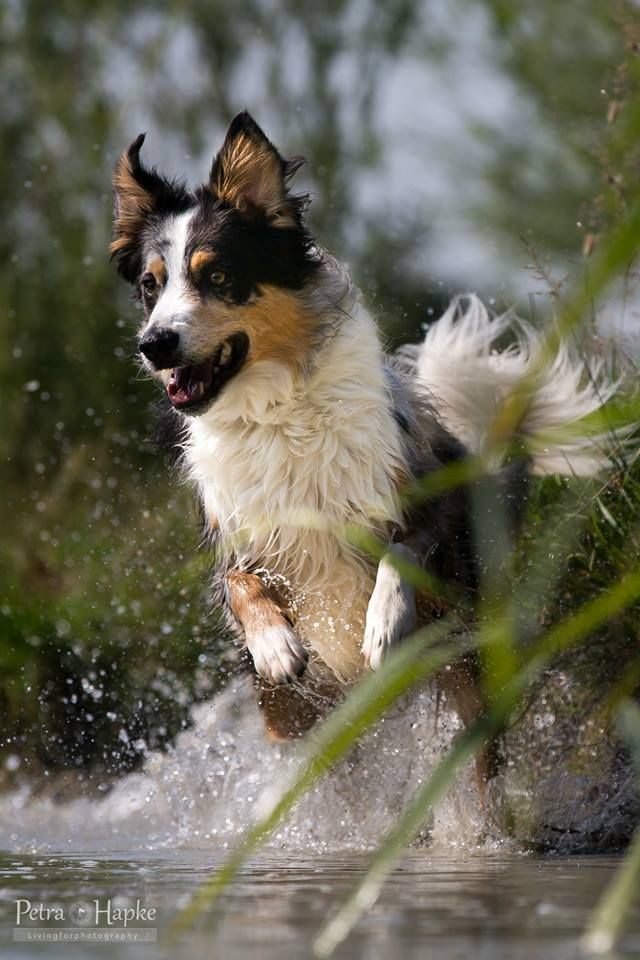 Petra Hapke Livingforphotography Dog Lovers Dog Love Animals Beautiful