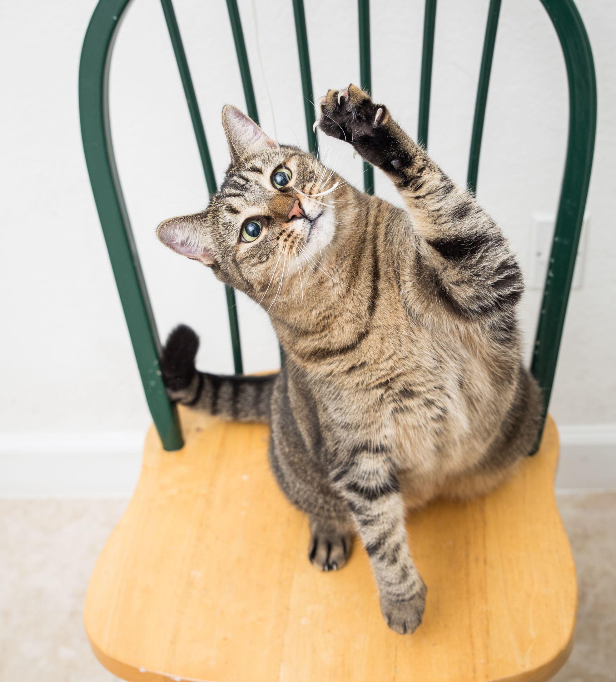 50 datos fascinantes acerca de tu gato