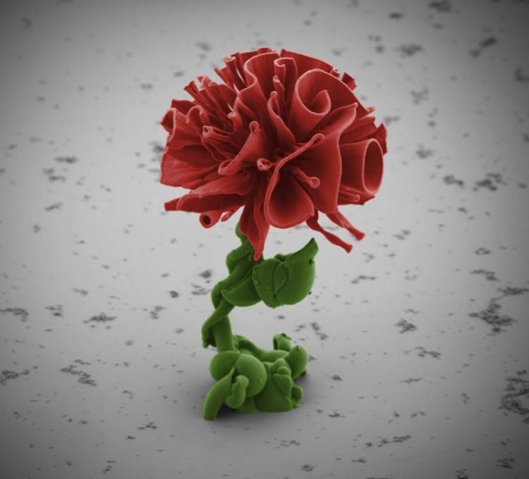 #Gossip Self-Assembling Nano Flowers Grown in Lab - Gossip Press... https://t.co/z9T4zLexFf https://t.co/cKN2TQUouu