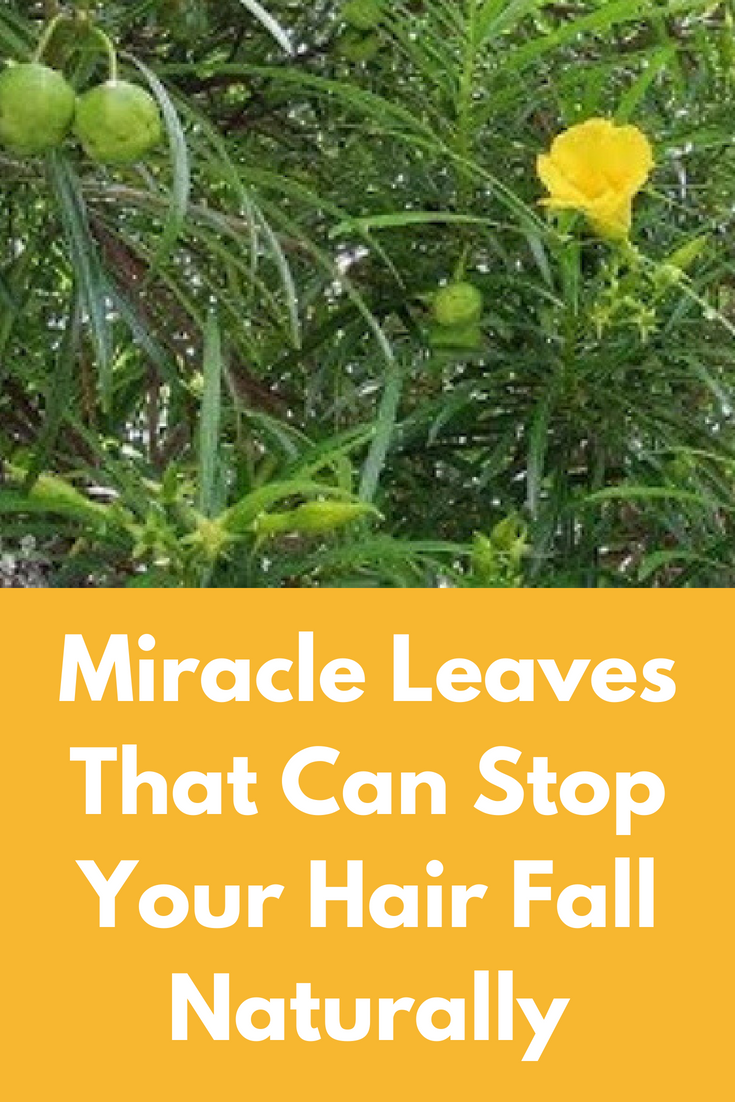 Miracle Leaves That Can Stop Your Hair Fall Naturally For This