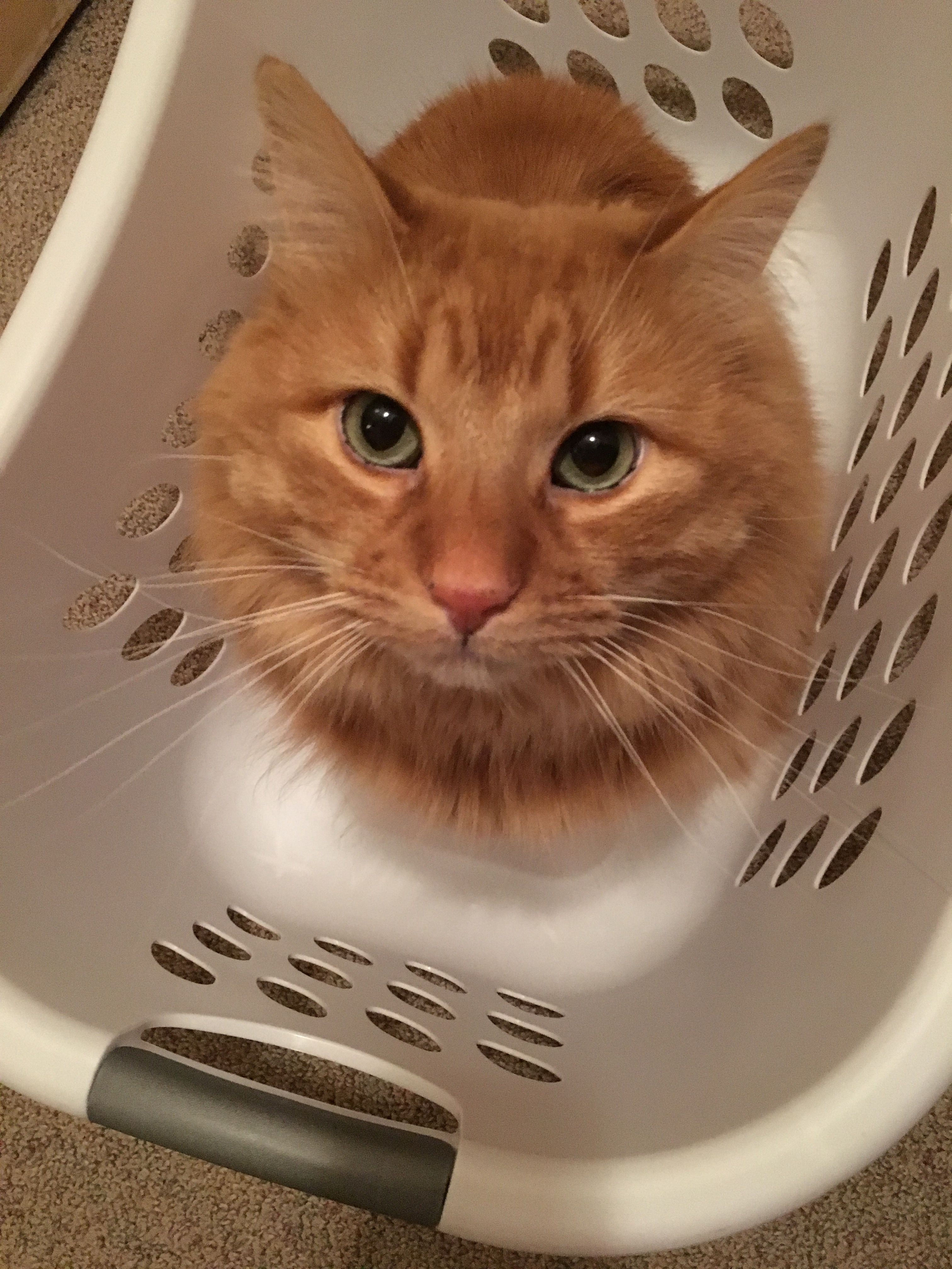This orange kitty needs some laundry to lie down on