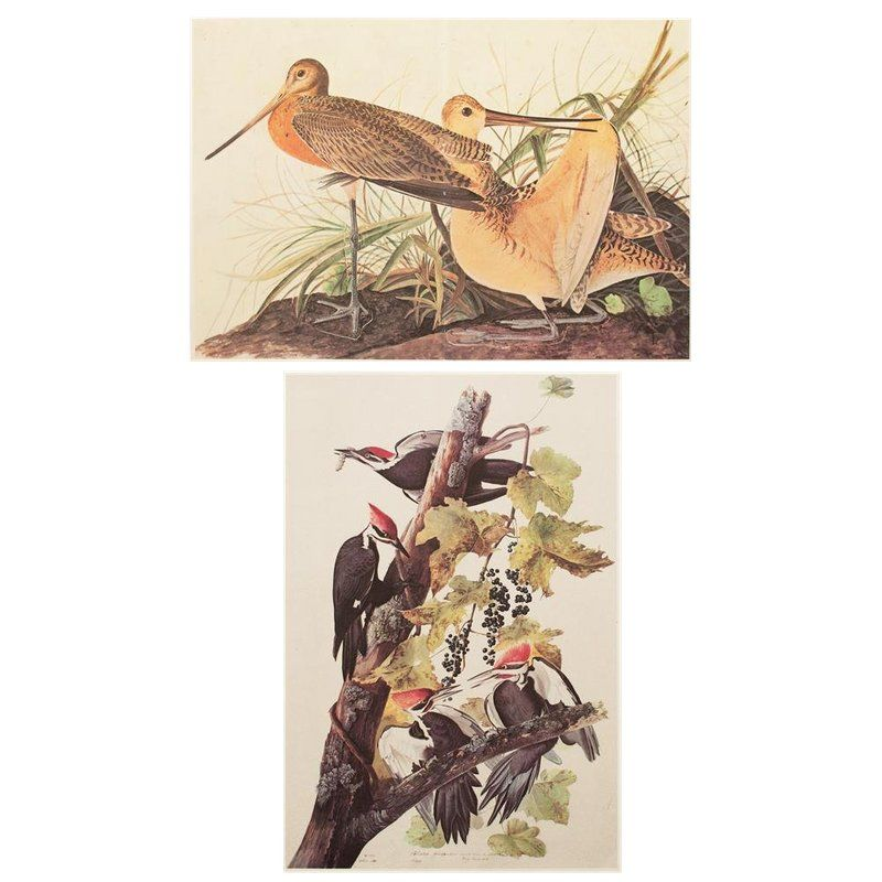 1966 Two Sided Birds Of America Lithograph Print By John James