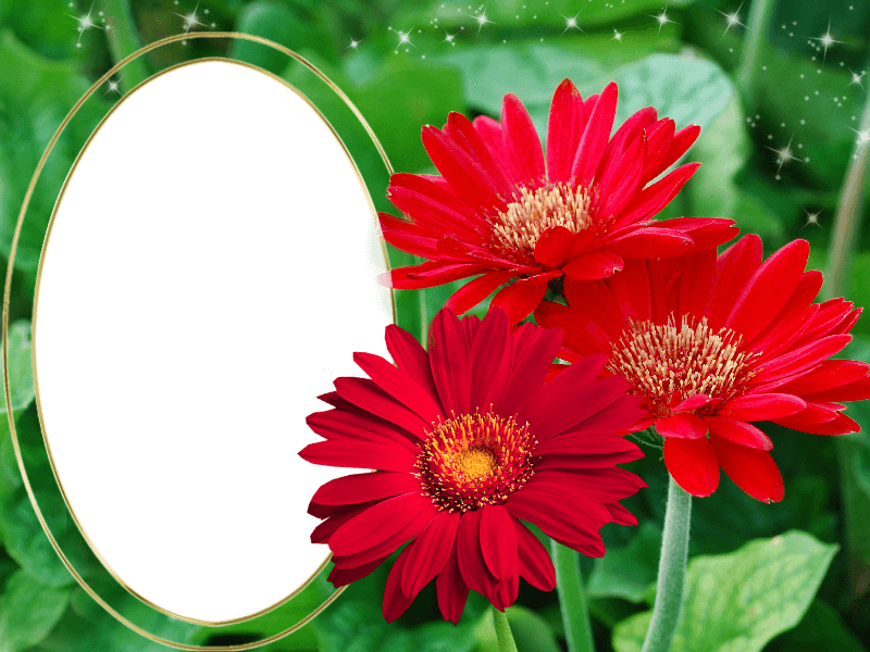 free digital printable transparent png picture frames borders for photo scrapbooking and clipart - Download Picture Frames