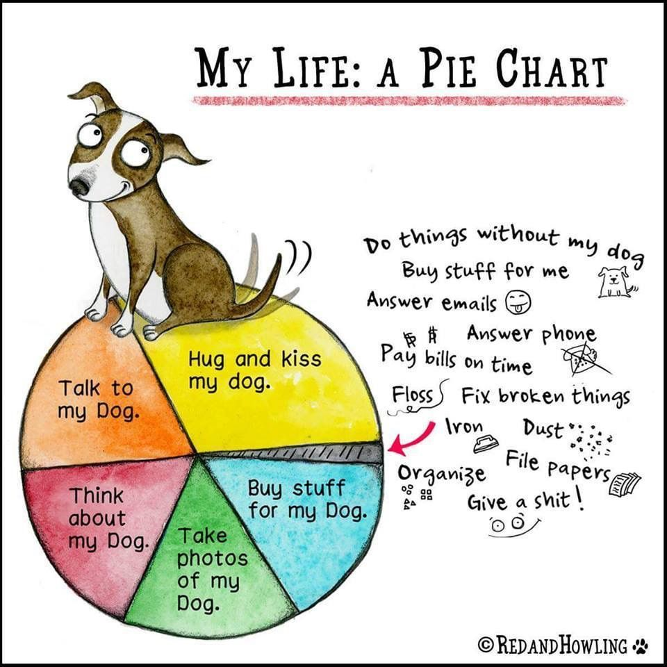 This is my pie chart ️ Crazy dog lady, Dog quotes, Dog
