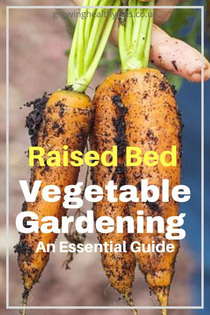 Raised Garden Beds For Beginners Growing Healthy Kids