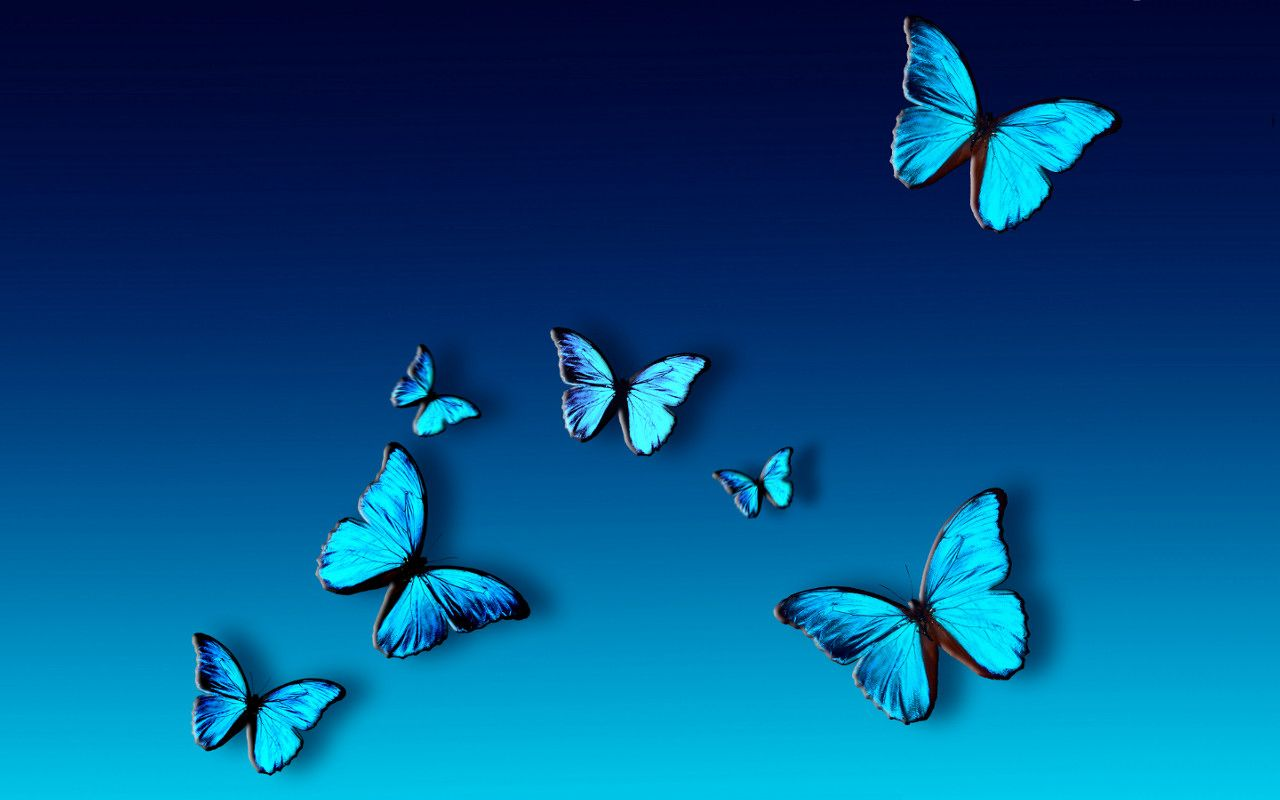 Top 14 Most Beautiful Butterflies In The World Amazing Colors