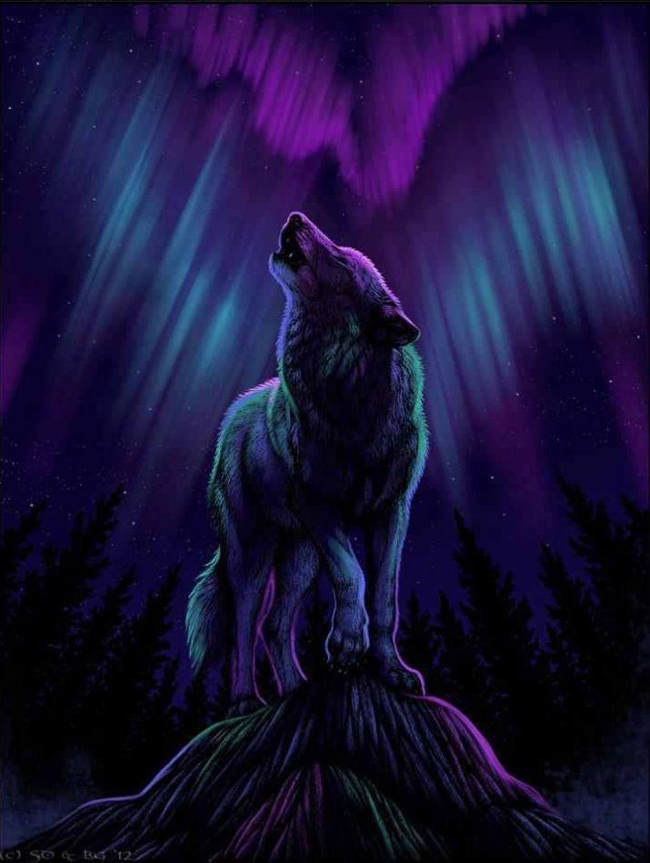 Purple Shadow Wolf Wolf Wallpaper Wolf Art Beautiful Wolves