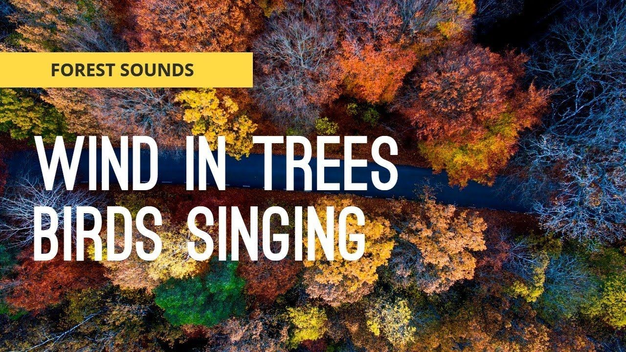 FOREST SOUNDS { Wind In Trees & Birds Singing } For