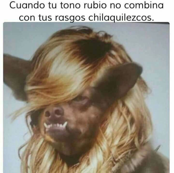 bf90abba818533d5930a613bd502018f cuando tu tono rubio no combina chilaquil \u2022 memes español