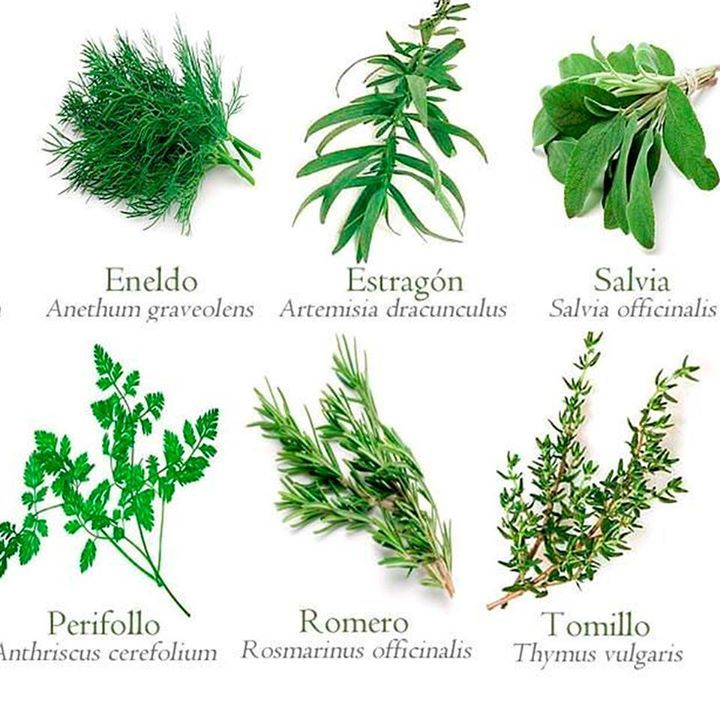 6 Plantas Medicinales Para La Salud Y Faciles De Conseguir Plantas Medicinales Plantas Aromaticas Y Medicinales Plantas