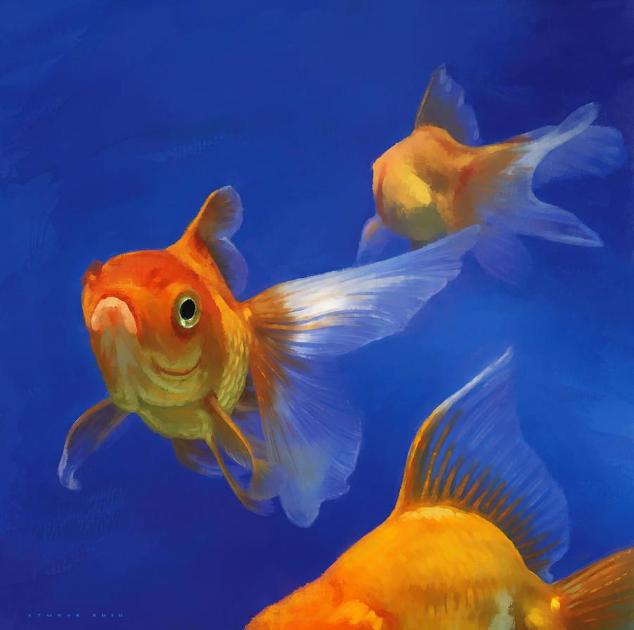 Three Goldfish By Simon Sturge Goldfish Art Goldfish Fish Art