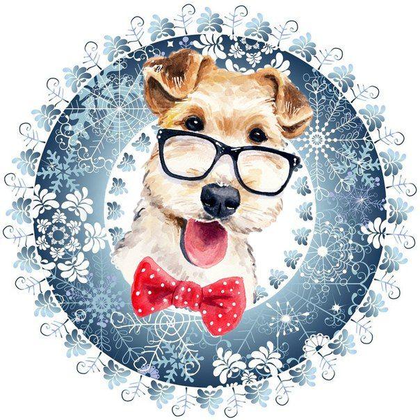 Fotografia | Рождественская собака, Собака поделки и ...
