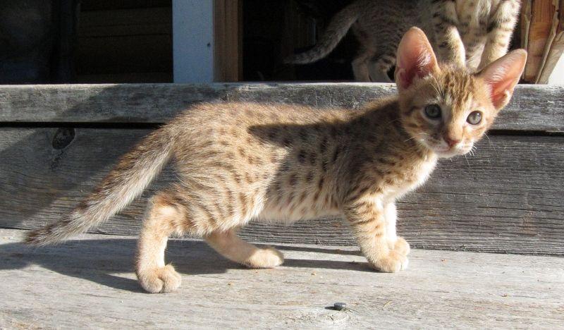 Pantteri ja leopardi: elokuu 2011
