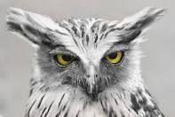 Owls dominate Pinterest