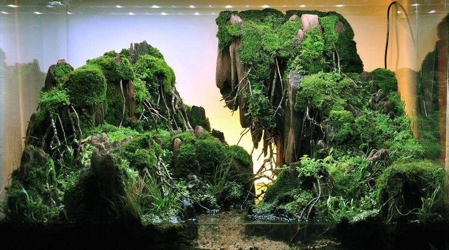 Miniscaping The Mystery Creek By Watana Supukpongvilai