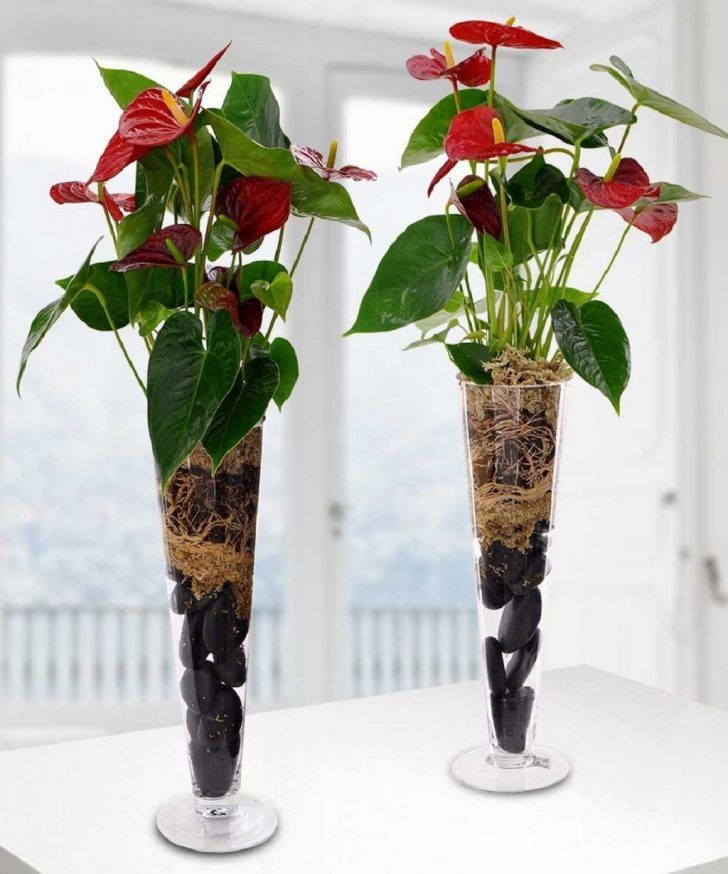 bright indirect light indoor plants anthurium - Tall Flowering House Plants