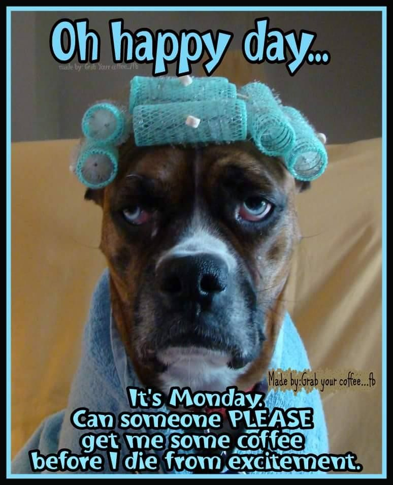 OMG! Why are Monday's not smoother? #goodmorning #mondays ...