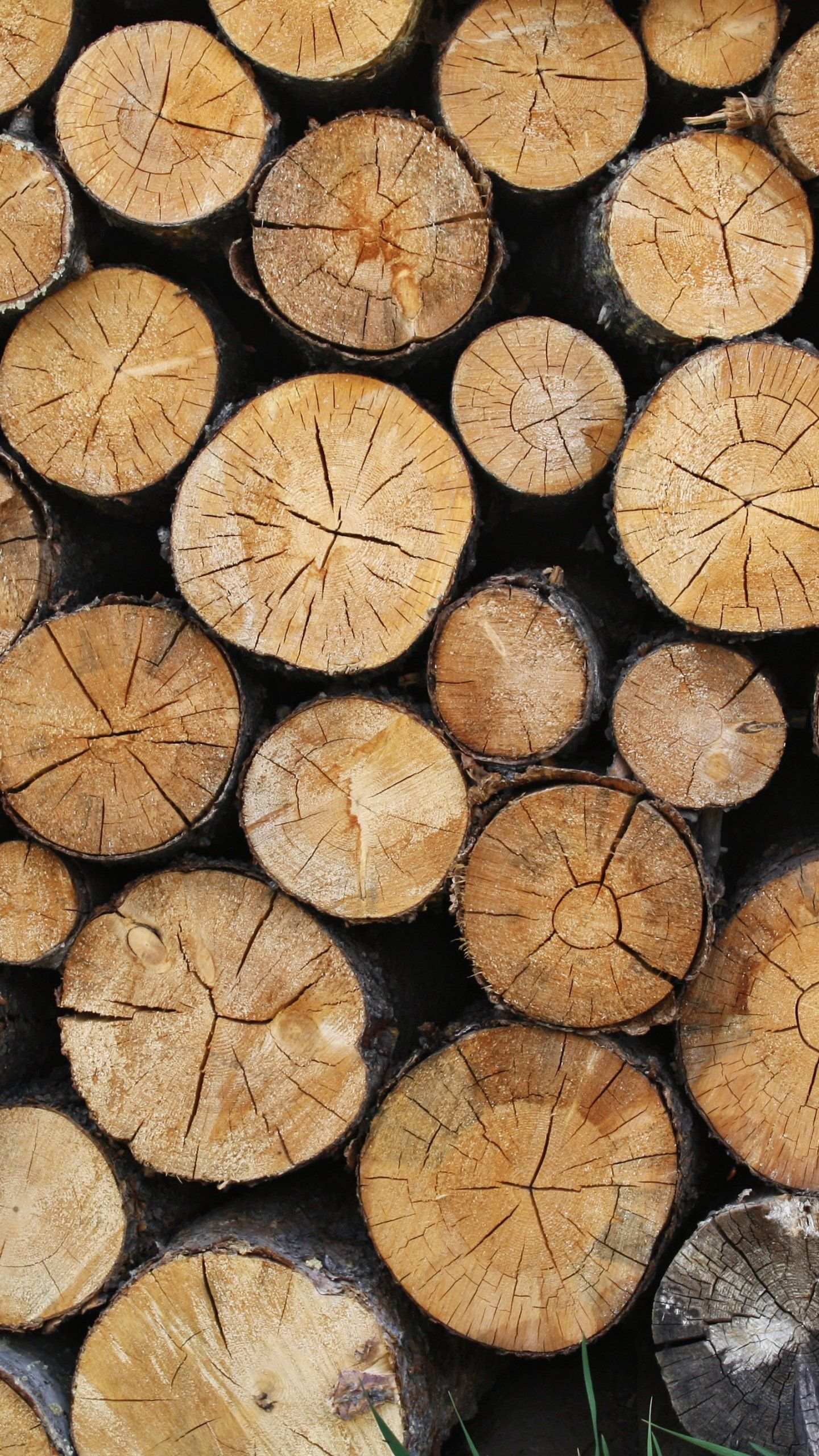 Wooden Logs Texture Wallpaper Iphone Android Desktop Backgrounds Textured Wallpaper Backgrounds Desktop Best Iphone Wallpapers