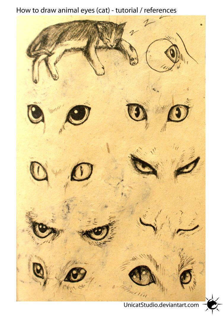 Animal Eyes Tuto by UnicatStudio on deviantART Drawings