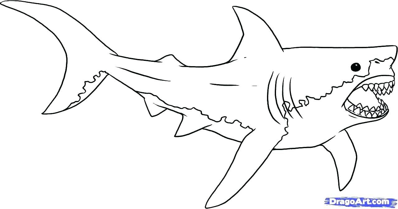 Huge Gift Great White Shark Coloring Pages Simplistic To Download
