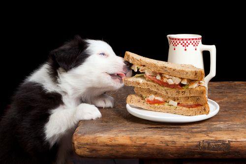 Assim como os humanos, os cachorros preferem roubar coisas no escuro, quando pensam que não estão sendo vistos.
