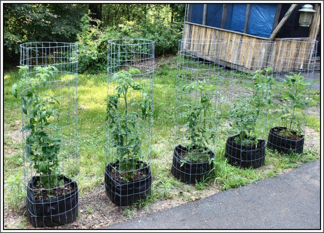 Tomato Plants In Grow Bags With 48 Tall Welded Wire Cages Serendipity Life Is A Garden Blog