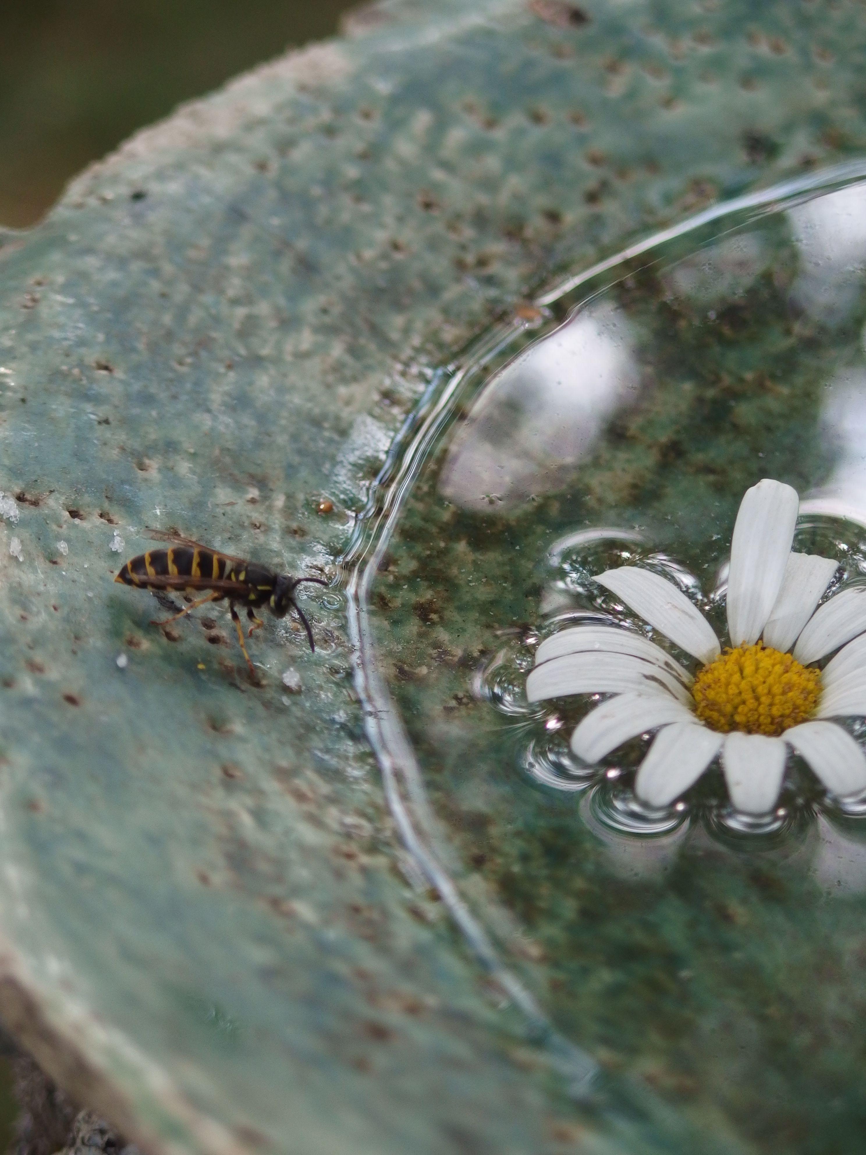 .ampiainen