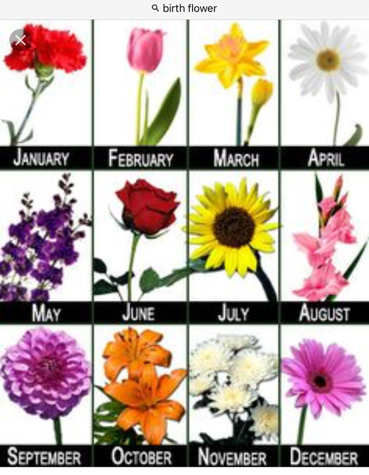 Pin by Yenderys Hilario on 4 MOMS Birth month flowers