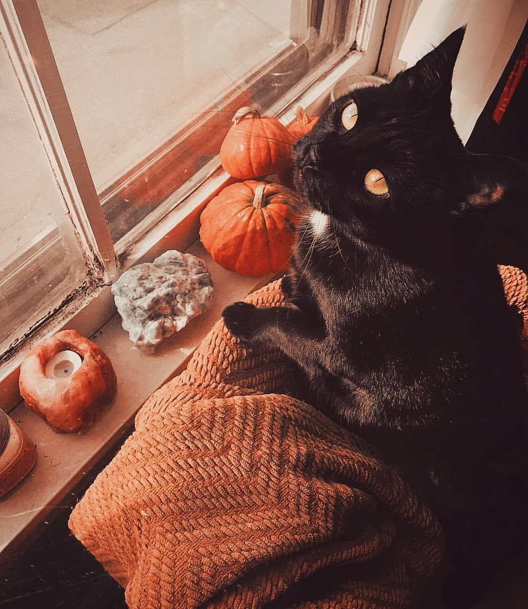 Fall World On Instagram I Love The Black Cats Stunning Pic By Taneisa Autumn Aesthetic Fall Halloween Autumn Inspiration