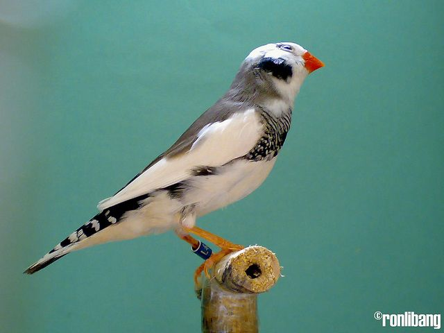 Pin On Finches