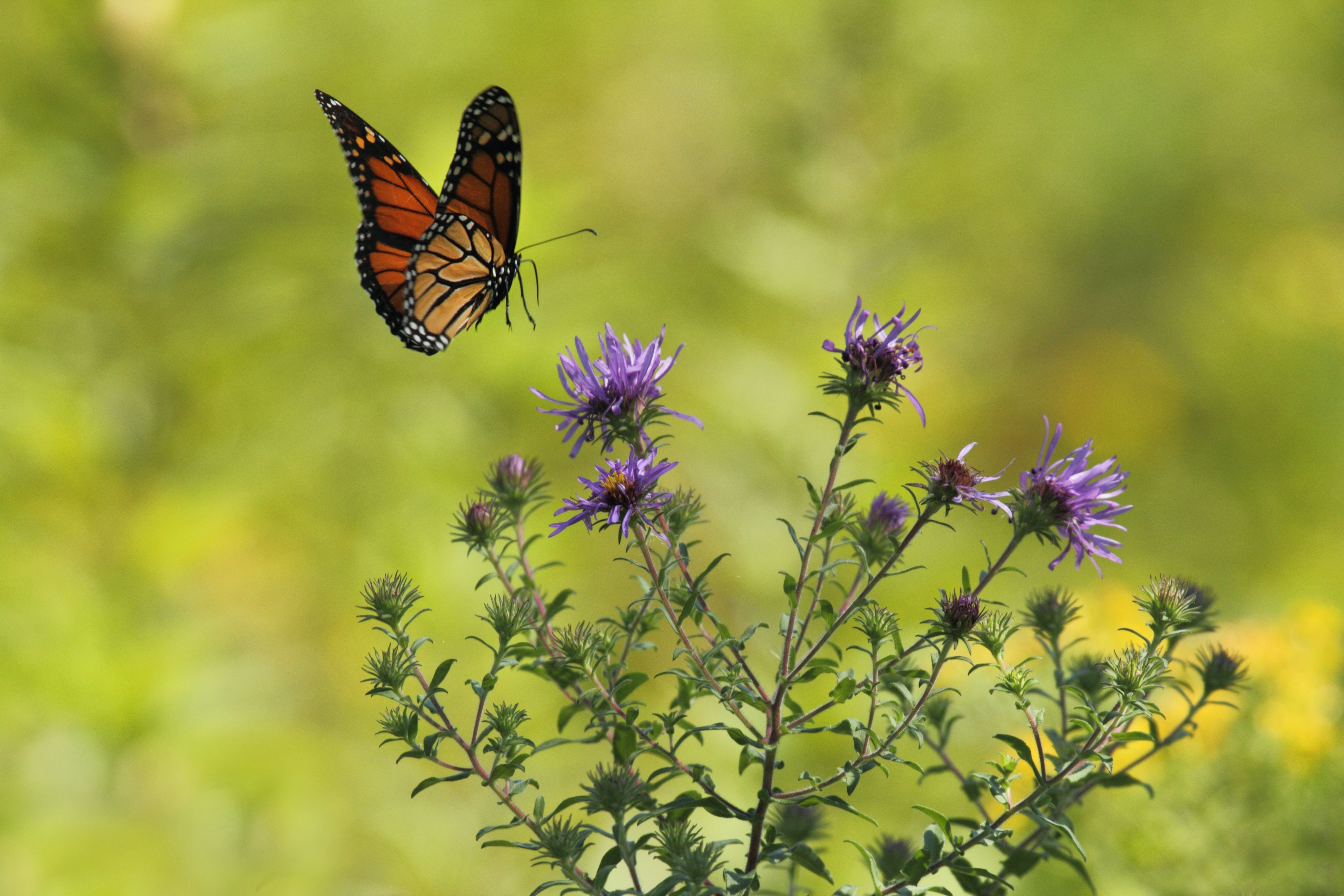 Butterflies matter. They inform us and they are natures art. Learn ...