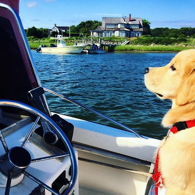 Beautiful day on the boat with the pup